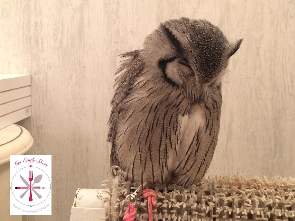 Akihabara, Owl, Cafe, Owlcafe, Elektronikviertel, Eulen, Streichelzoo, Toyko, Japan, Tokio