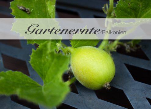 Gemüseanbau, Anbau, Garten, Obst, Ernte, Radieschen, Tomaten, Karotten, Zwiebeln, Wassermelone, Kartoffel, Anbau, Ernte, Balkonien