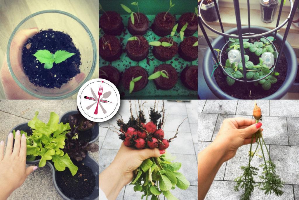 Gemüseanbau, Anbau, Garten, Obst, Ernte, Radieschen, Tomaten, Karotten, Zwiebeln, Wassermelone, Kartoffel, Anbau