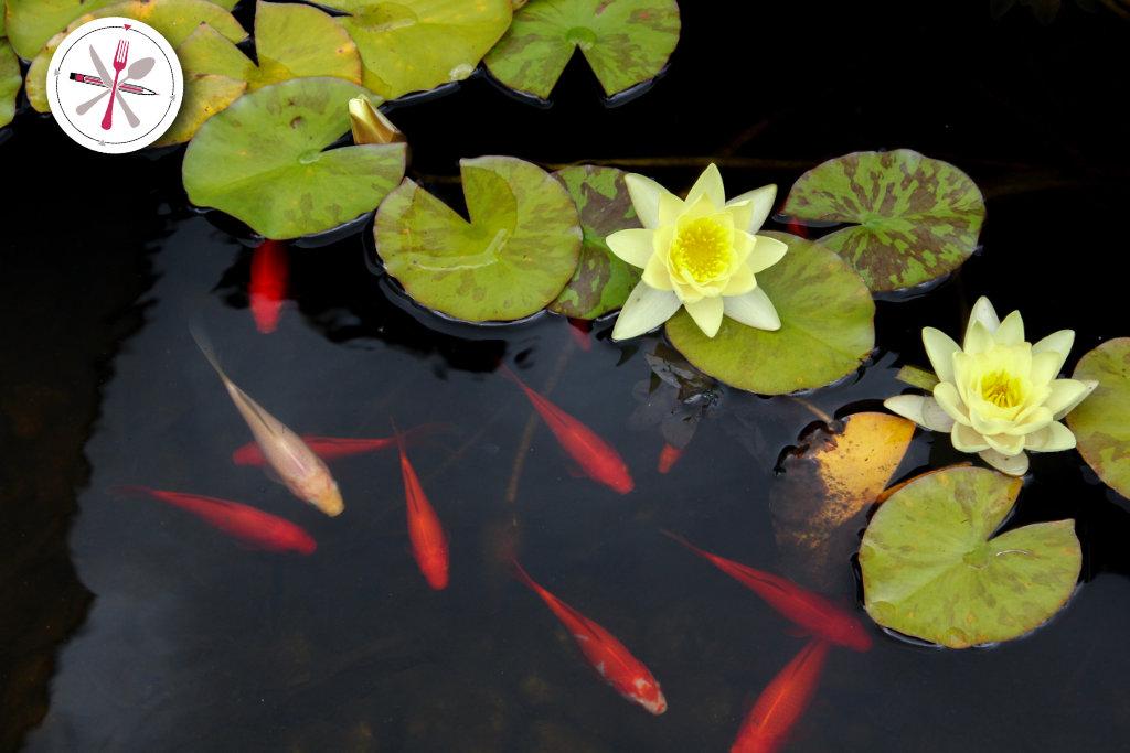 Goldfische, Teich, Goldfischteich, Ingolstadt